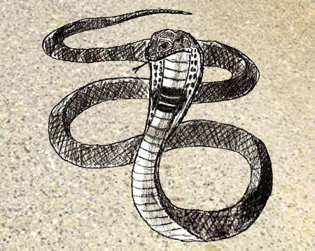 450x359 How To Draw A Snake