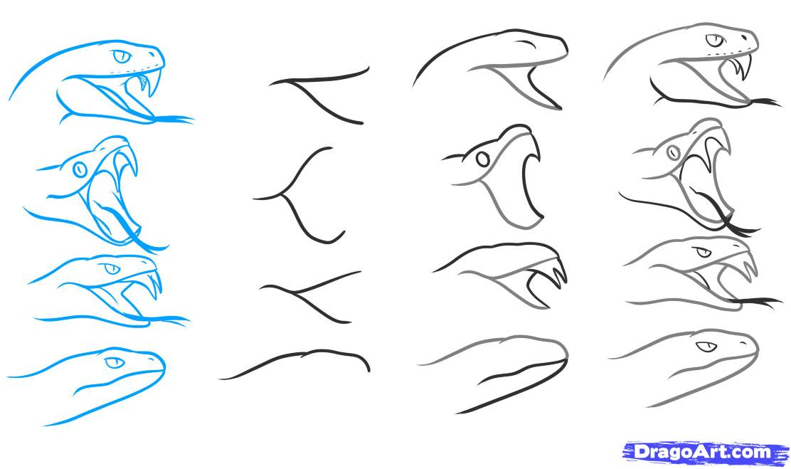 1112x659 How To Draw A Snake Head, Draw Snake Heads, Step By Step, Snakes