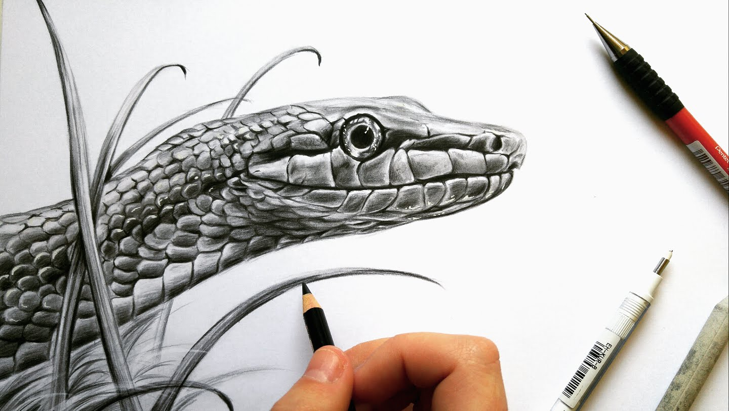 1440x813 Pencil Drawing Of A Snake