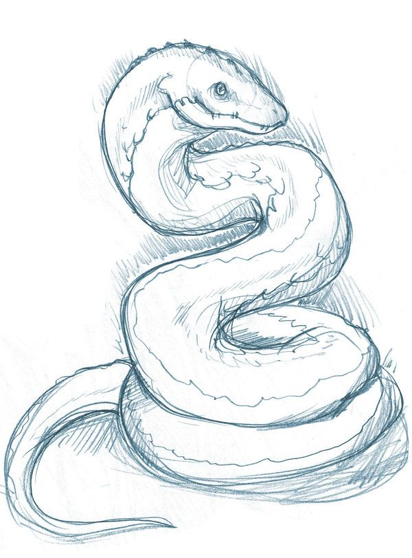600x812 Pin by phantom core on drawing Pinterest Snake, Drawings and