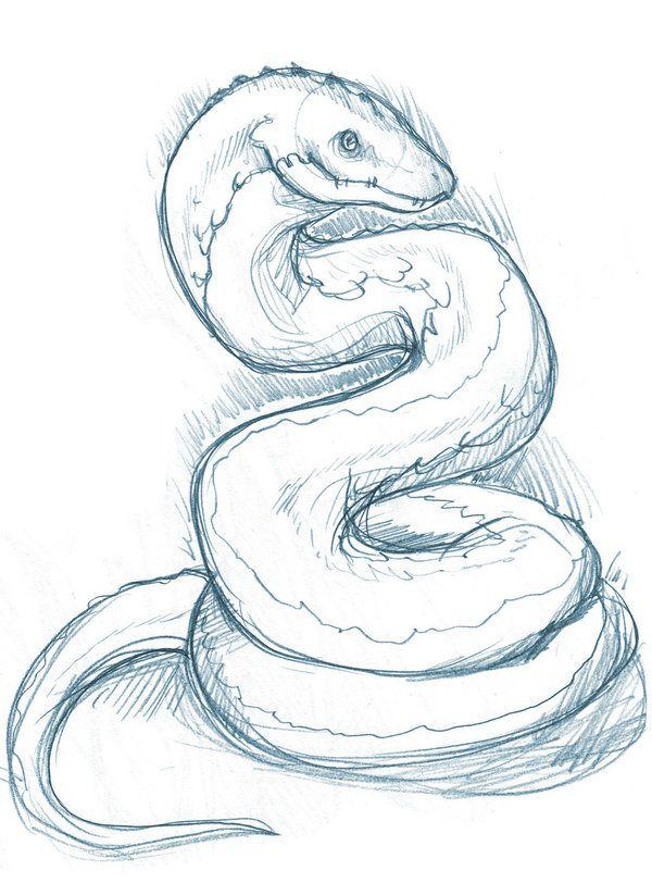 600x812 Pin By Phantom Core On Drawing Snake, Drawings
