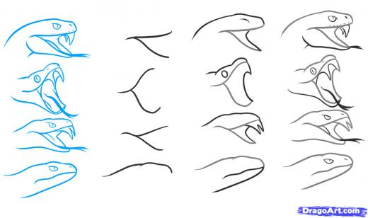 520x308 Step 4. How to Draw a Snake Head, Draw Snake Heads Tutorial