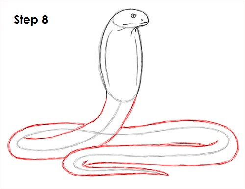 500x386 How To Draw A Snake (King Cobra)