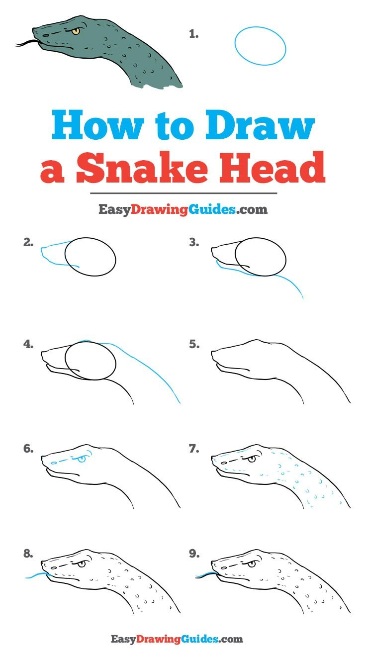 736x1327 How To Draw A Snake Head