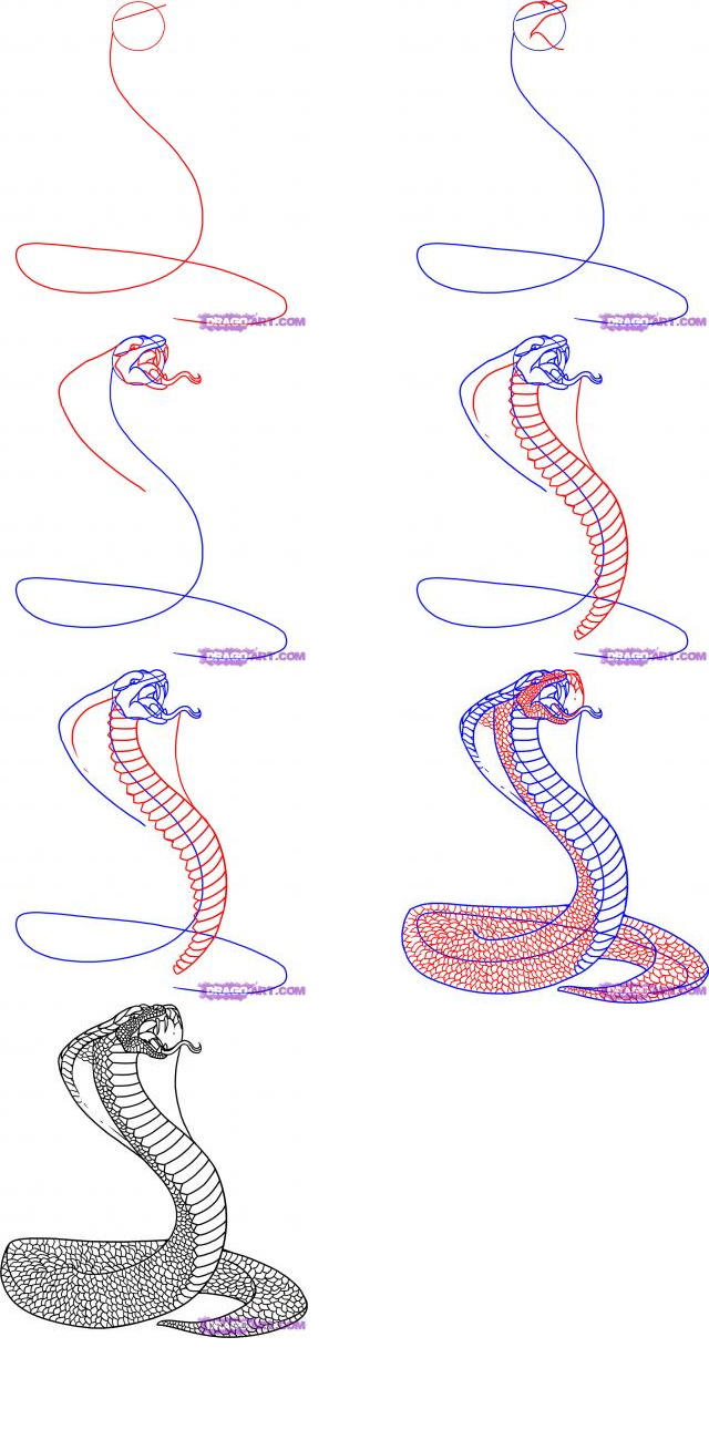 640x1300 Snake Drawings Step By Step How To Draw A Cobra How To Draw