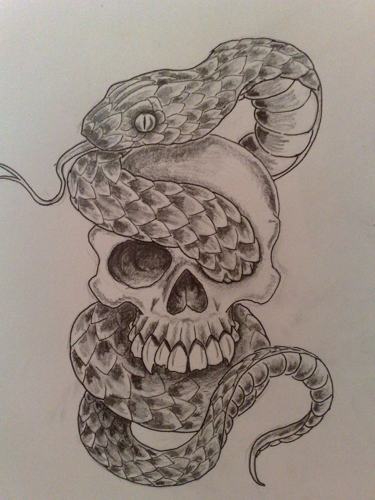 Snake skull drawing at getdrawings free for personal use snake 736x981 snake thecheapjerseys Gallery