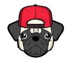 220x200 Snapback Pug Photographic Prints By Diffy2009 Redbubble