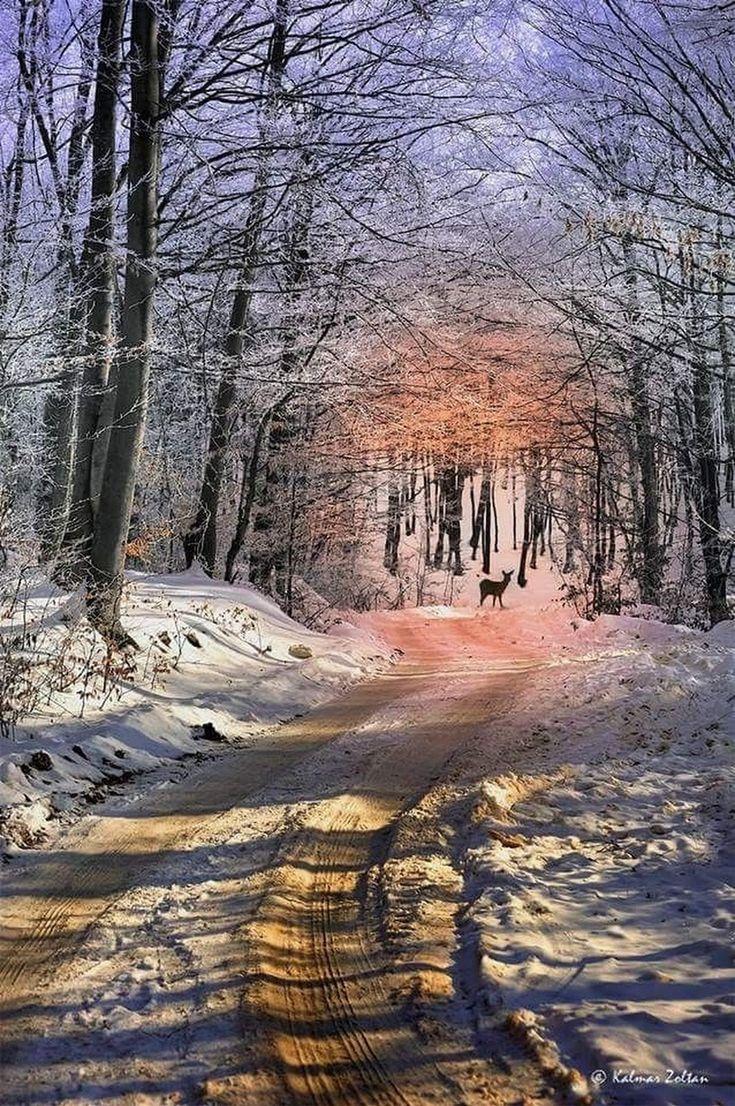 735x1106 Snowy Woodland Landscape Drawing Snow Landscape Drawing 17 Best