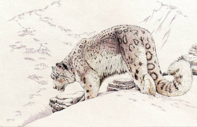 770x497 Saatchi Art Snow Leopard Drawing By Charles Berry