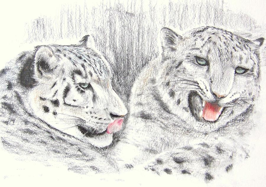 900x634 Snow Leopard Cubs Drawing By Terence John Cleary