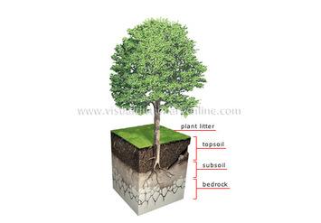 355x247 Soil Profile Drawing And 4 Soil Horizons