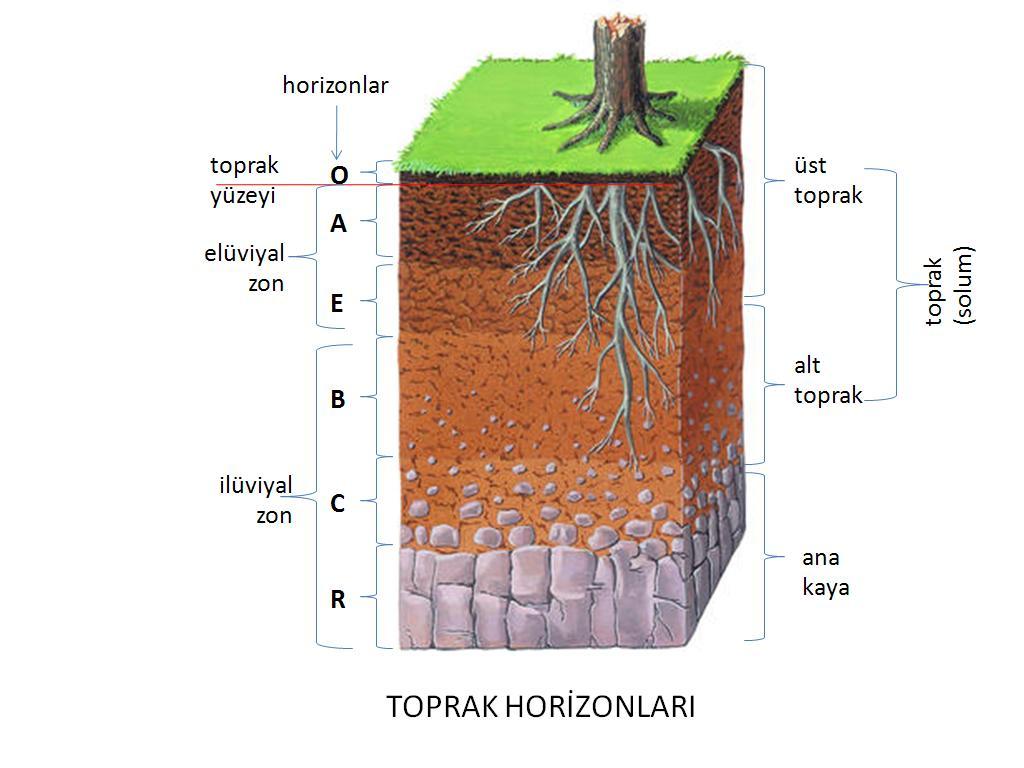 1024x768 Toprak Profili Soil Profile