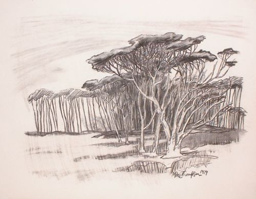 500x389 Charcoal Drawing Of Pines Near Cape Town South Africa