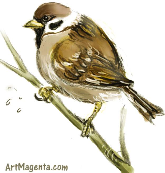 625x654 Birds Tree Sparrow