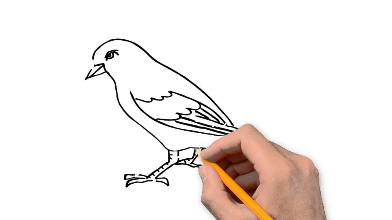 1280x720 Sparrow Animals Pencil To Draw Step By Step