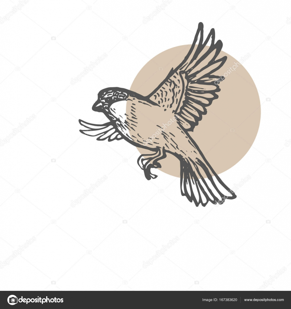 963x1024 Sparrow Birds Sketch Background. Hand Drawn Painting Illustration