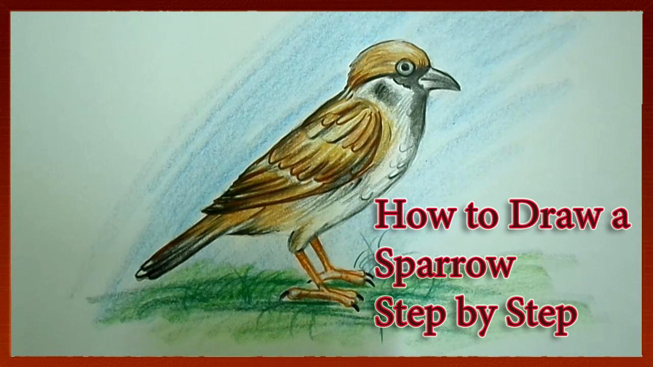 1280x720 How To Draw A Sparrow Easy