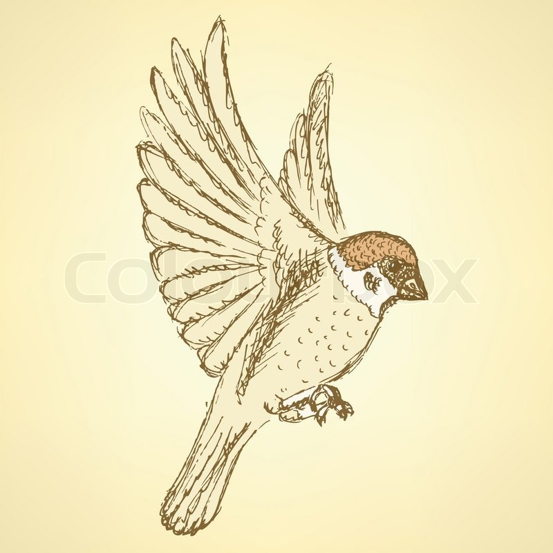800x800 Sketch Cute Sparrow, Vector Background In Vintage Style Stock