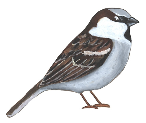 500x421 World Sparrow Day