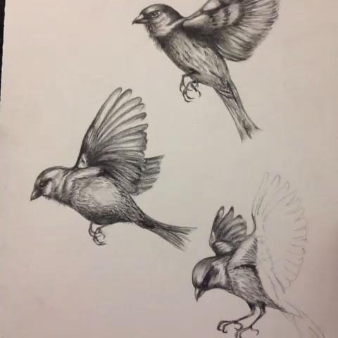480x480 Sparrow Drawing Tattoo