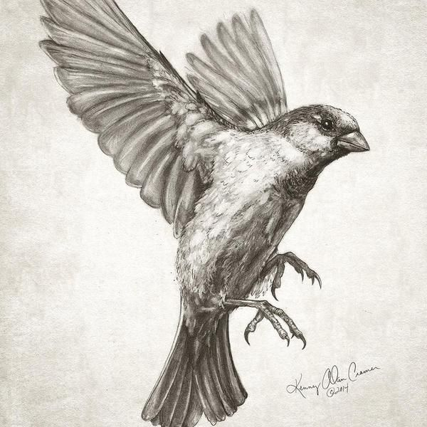 600x600 Ideas About Sparrow Drawing On Pen And Ink
