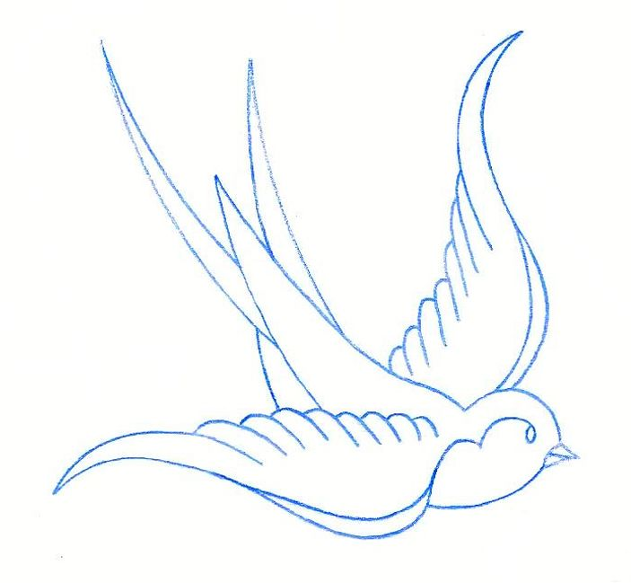 703x649 40 Best Swallow Bird Tattoo Drawing Designs Images