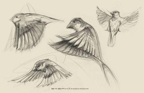 564x364 Sparrow Drawing Tattoo
