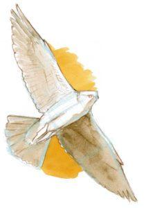 211x300 How To Draw Birds In Flight
