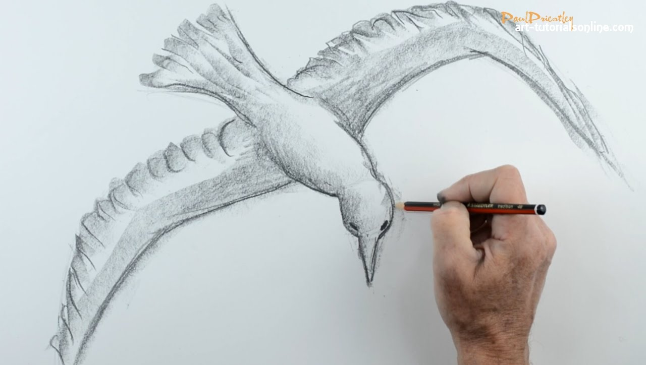 1280x724 How To Draw A Bird Flying 1
