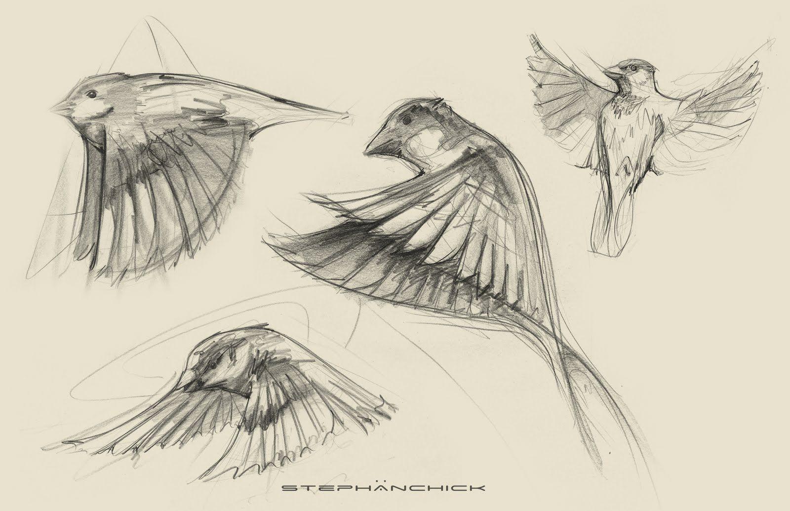 1600x1035 Sparrow Drawing Tattoo