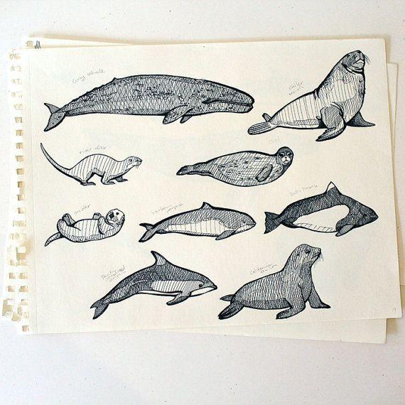 570x570 Billedresultat For Drawing Harbour Porpoise Illustrator Make