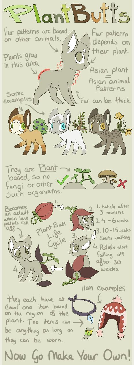 464x1260 Feathertail Species Guide [New Info] By Coffeecuppup Draw