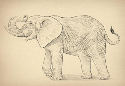 400x277 How To Draw Animals Elephants, Their Species And Anatomy