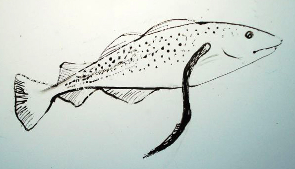 595x341 Indicator Species Drawing In The Field