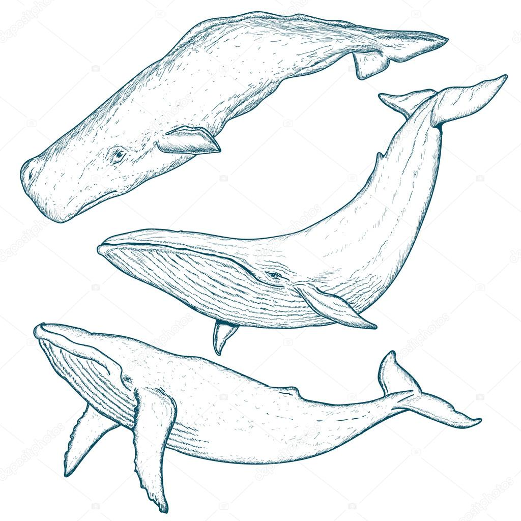 1024x1024 Whales Set Humpback Whale Blue Whale Sperm Whale Stock Vector