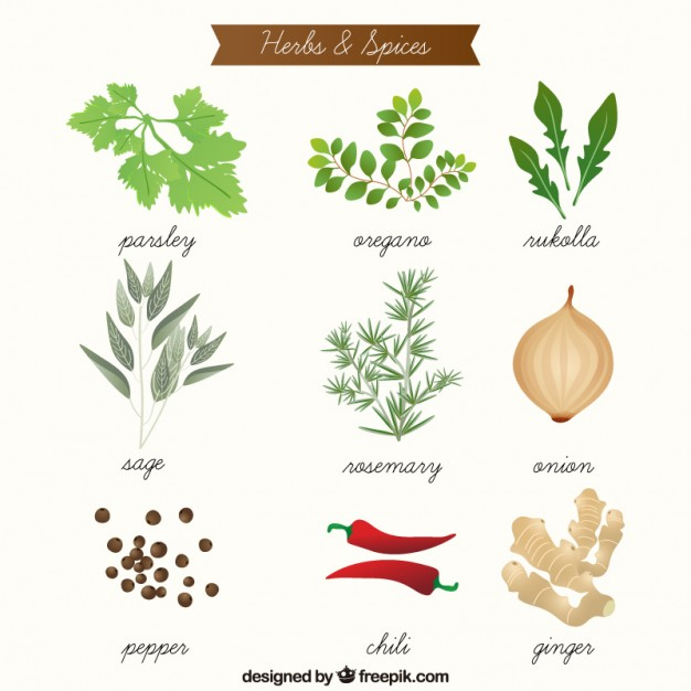 626x626 Hand Drawn Aromatic Herbs And Spices Collection Vector Premium