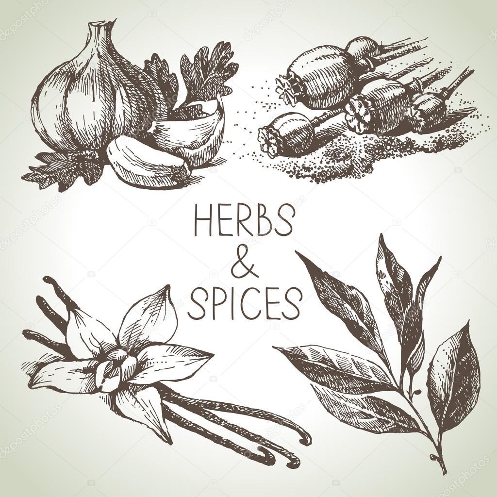 1024x1024 Kitchen Herbs And Spices. Stock Vector Pimonova