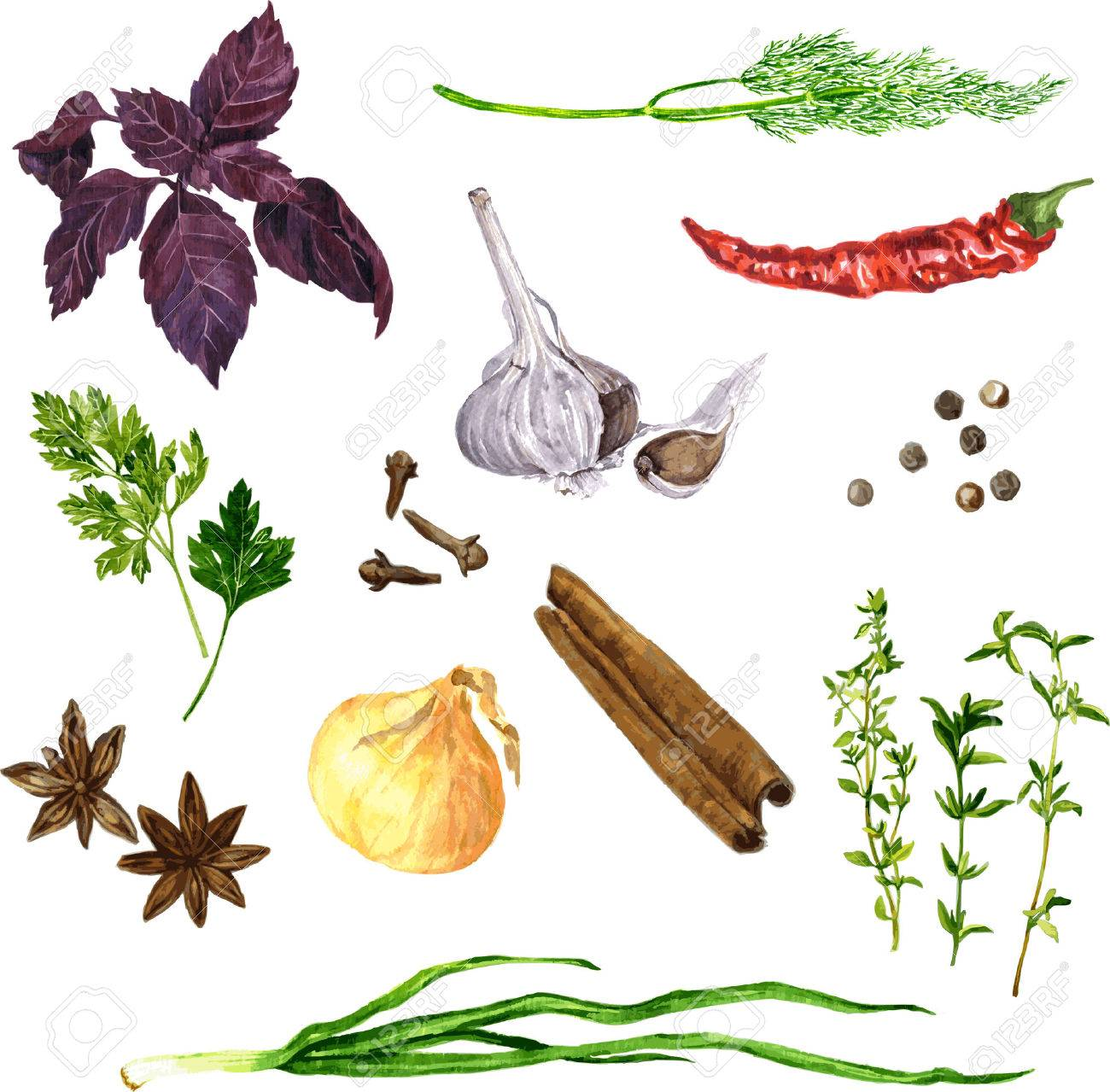1300x1279 Vector Set Of Green Stuff, Spices And Vegetables Drawing By