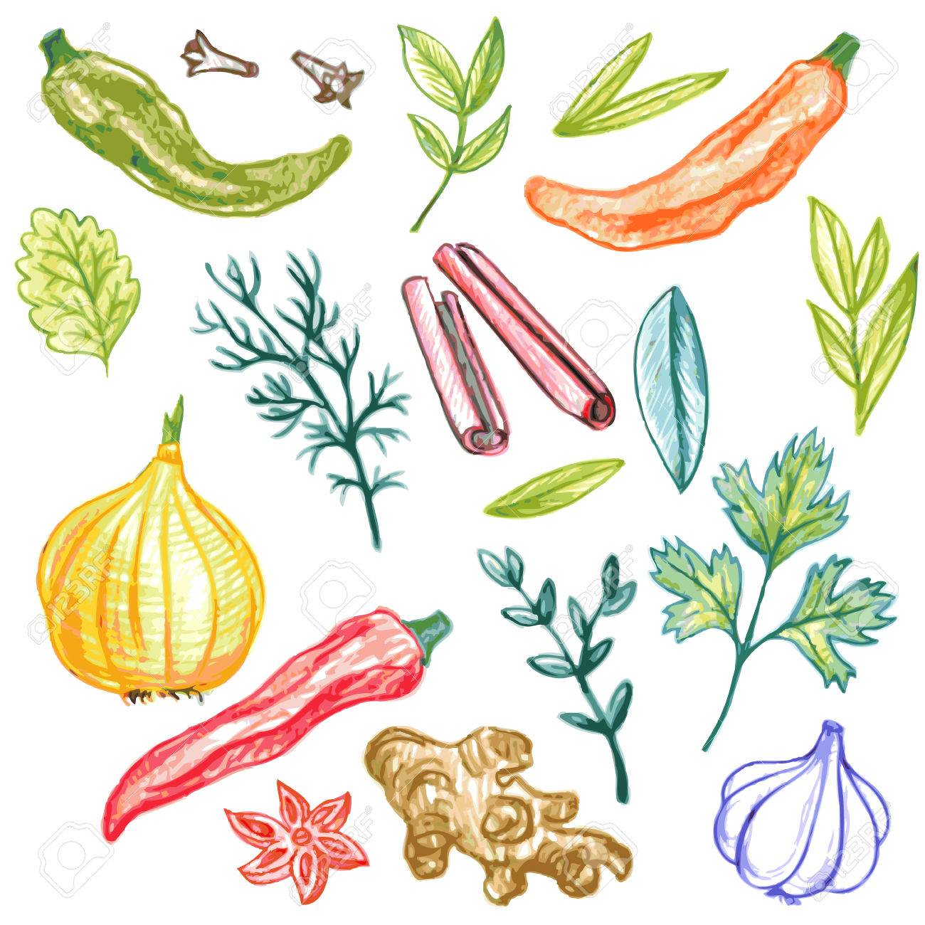 1300x1300 Vector Set Of Spices Drawing By Color Pencil, Doodle Foods, Hand