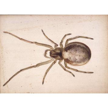355x355 Study Of A Greenish Brown Spider Potter, Beatrix Vampa Search