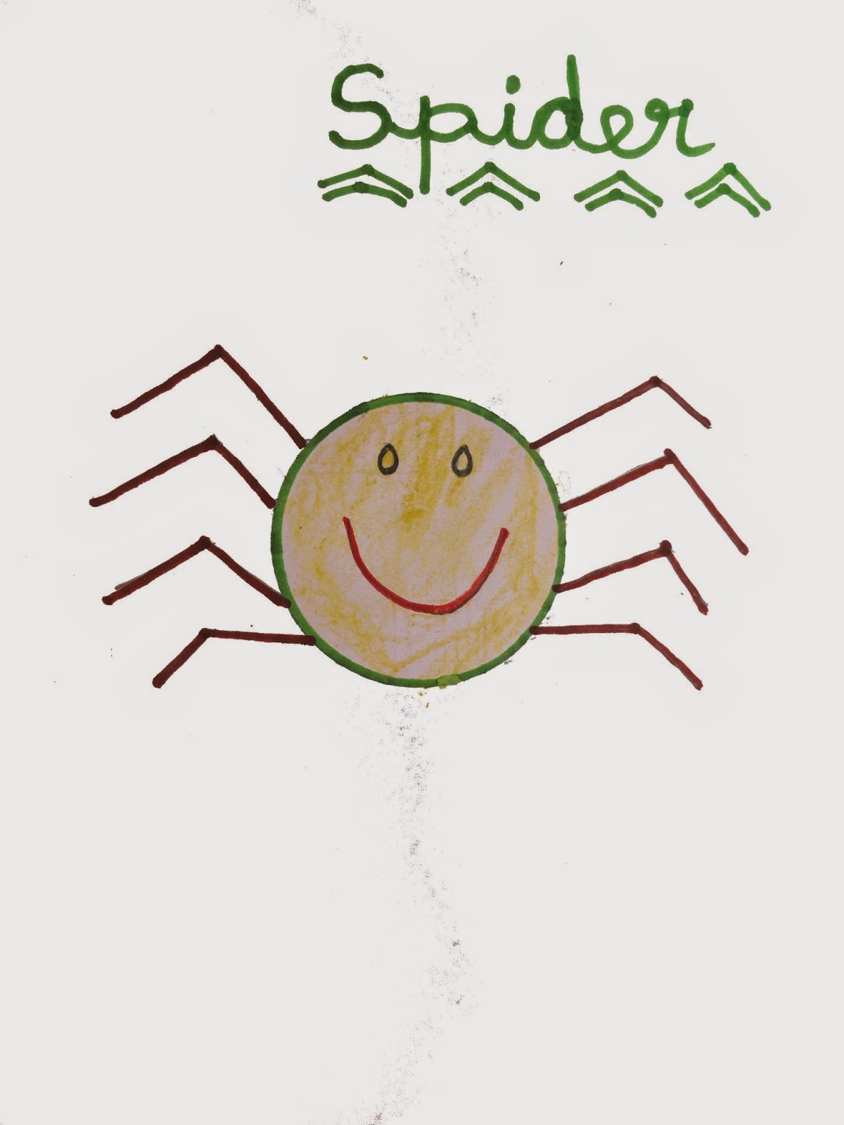 1200x1600 Spider Drawing And Facts Virtual Kidspace