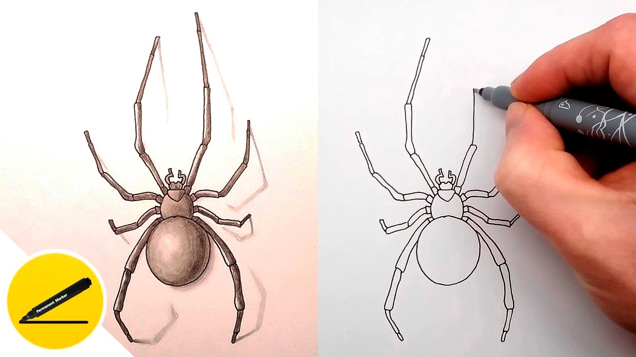 1280x720 How To Draw A Spider Step By Step
