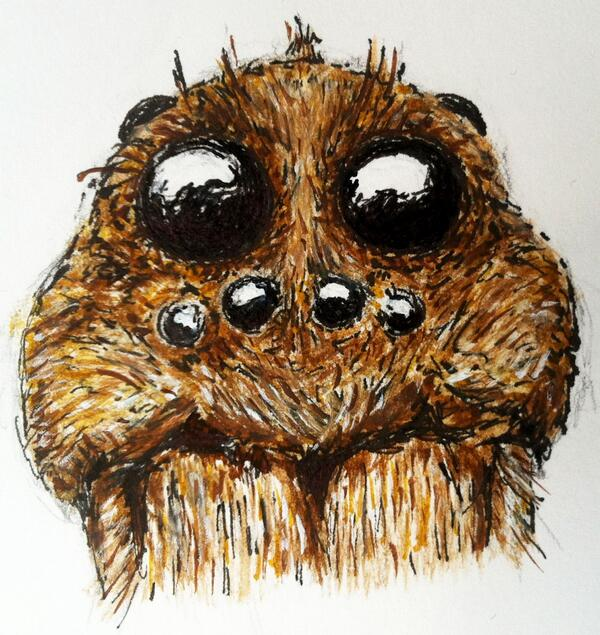 600x635 Harvard Forest On Twitter Wolf Spider Face, Drawn By Hf Summer