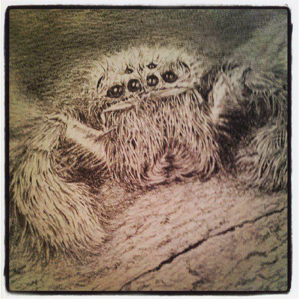 612x612 Huntsman Spider. Face With 8 Eyes. Pencil Sketch. My Art (Spider