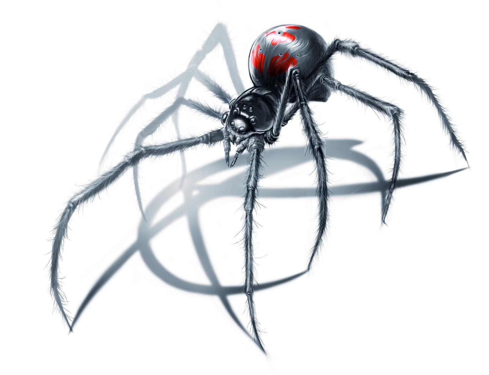 1557x1194 Black Widow Drawing How To Draw Black Widow Spider