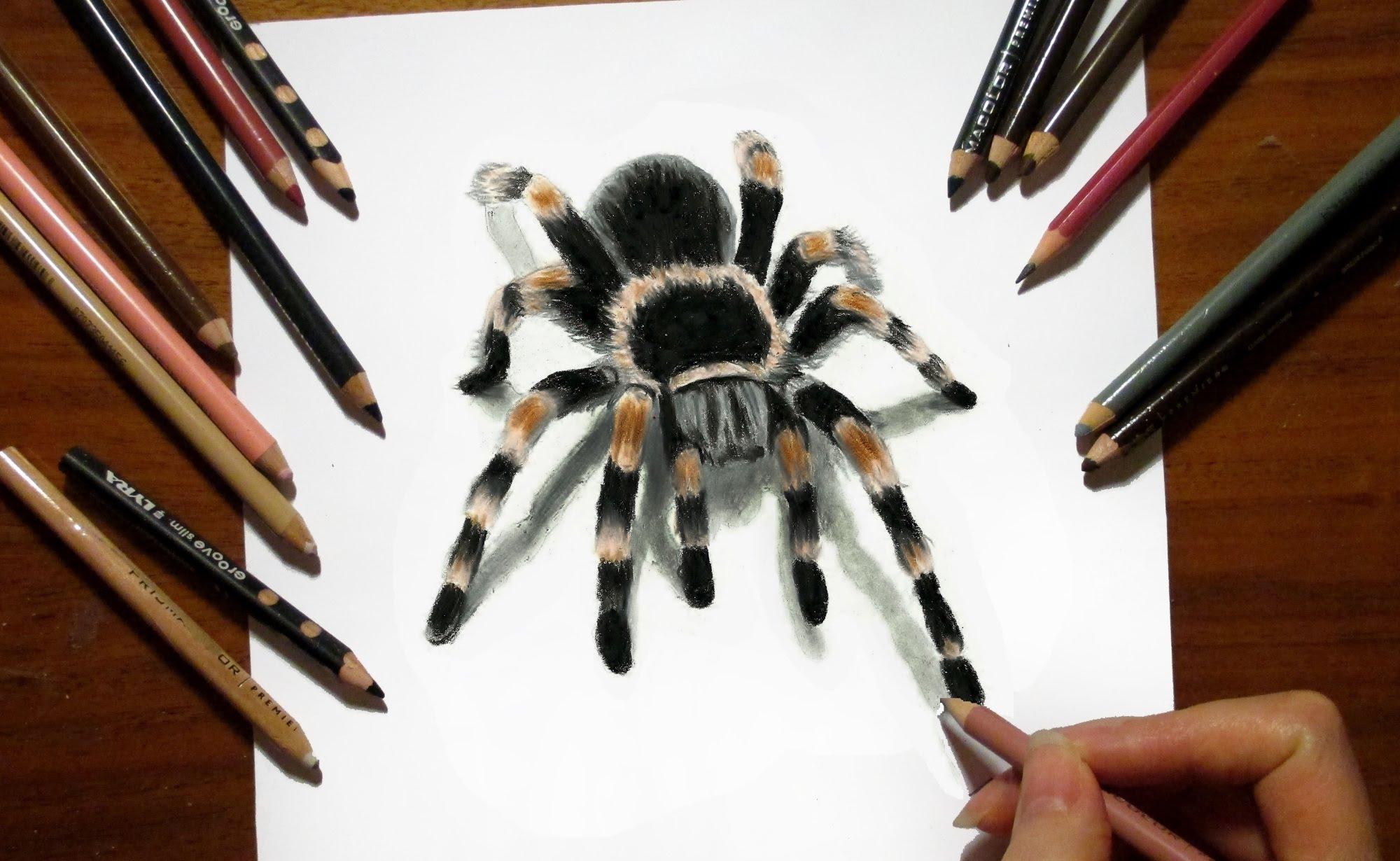2000x1230 3d Drawing Tarantula Spider In Colored Pencil