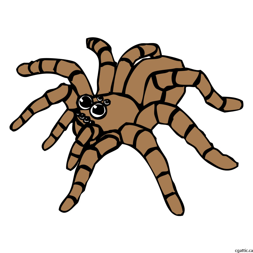 1000x1000 Spider Cartoon Drawing In 4 Steps With Photoshop