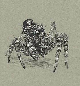 280x300 Spiders Drawings