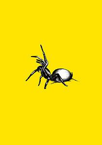 210x300 Tarantula Spiders Drawings Fine Art America