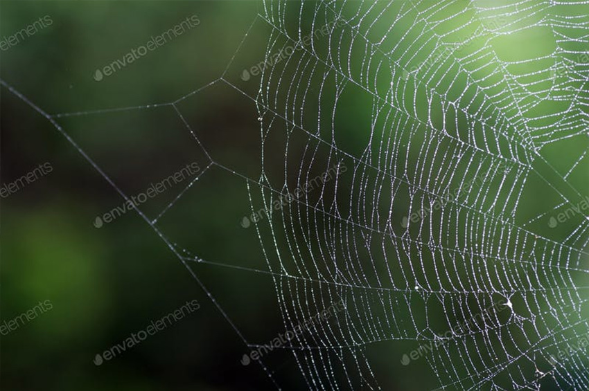 850x565 How To Draw A Spider Web Step By Step